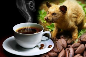 300 euros por un kilo de café